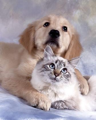 Собаки и кошки: соответствие возрасту человека