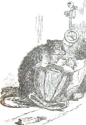 Хруп. Воспоминания крысы-натуралиста. Мое детство