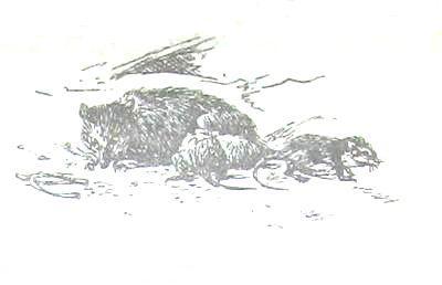 Хруп. Воспоминания крысы-натуралиста. Мое детство.