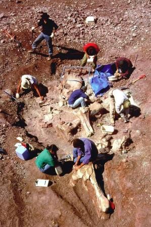 Исполины-гиганты, невероятное фото