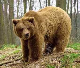 Медвежий промысел сергачан
