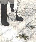 Спаржа (аспарагус) - поспдка молодых растений