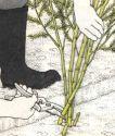 Спаржа (аспарагус) - удаление побегов