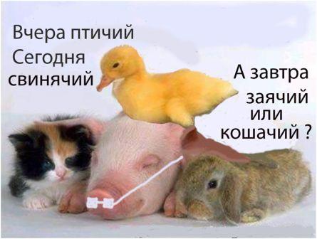 Свиной грипп, птичий, телячий...