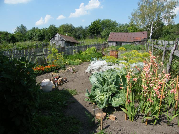 Огород с забором (слева)